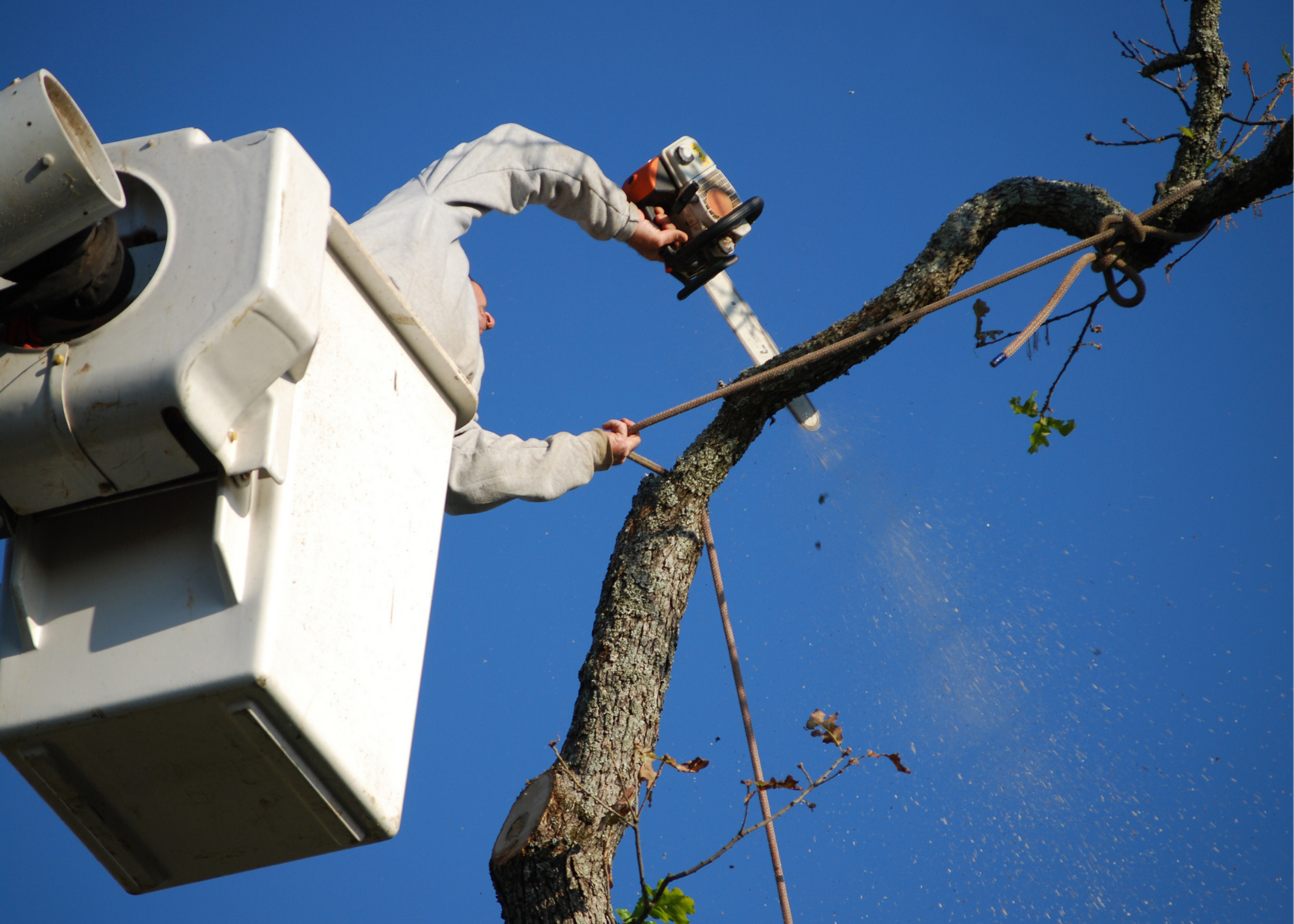 tree trimming service Spring TX