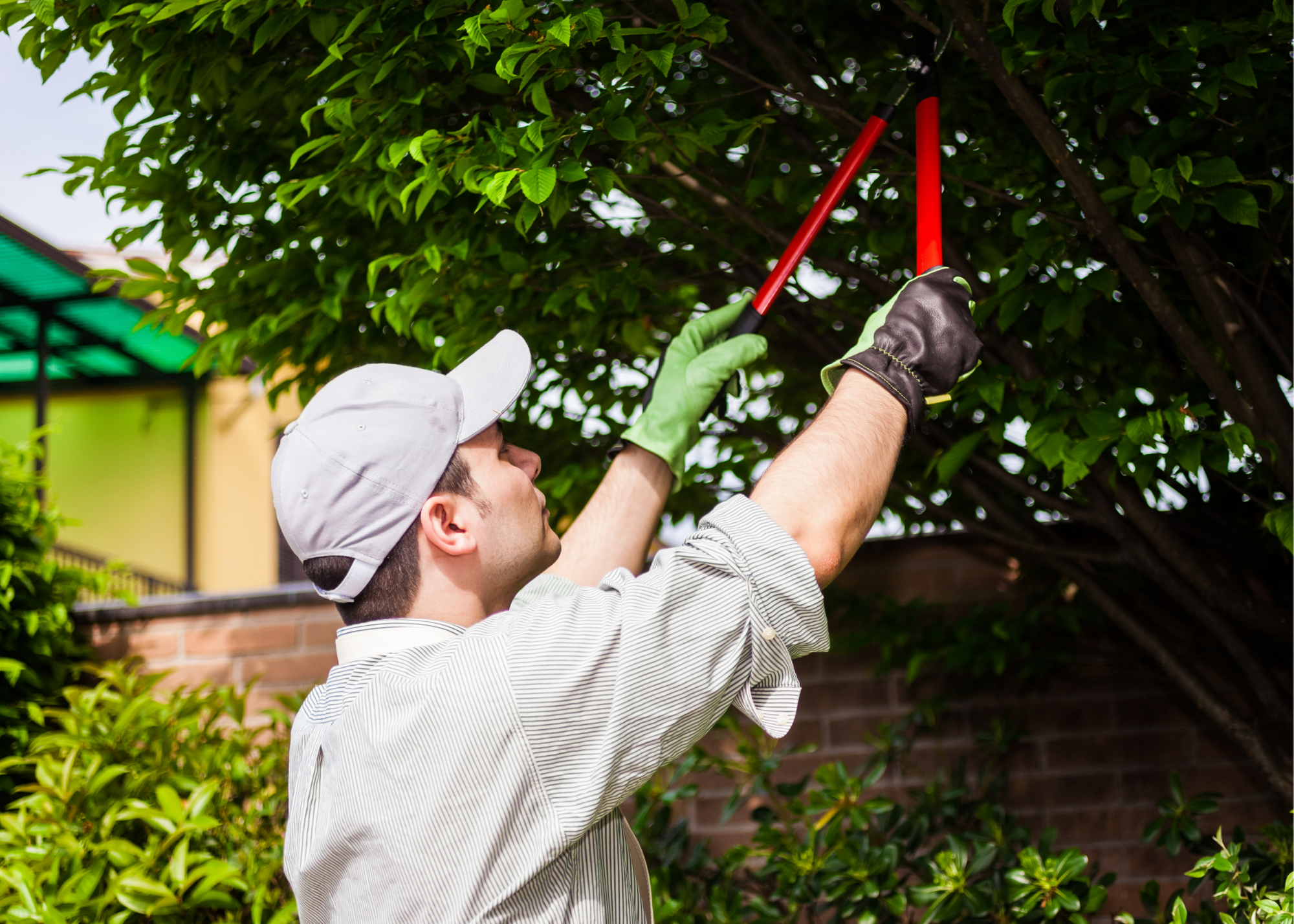 tree service Spring county
