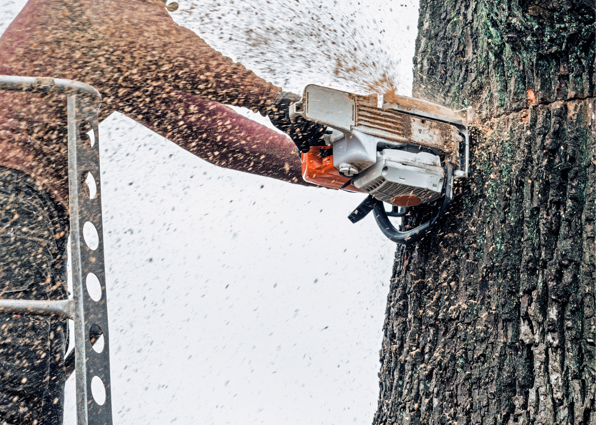 tree trimmers Spring